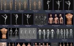 美术绘画 艺用三维3D人体雕塑解剖 肌肉骨骼结构 参考资料图片